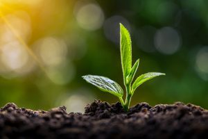 Looking to sustainability for opportunity