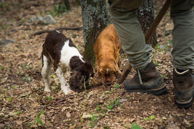 Truffle hunting in credit