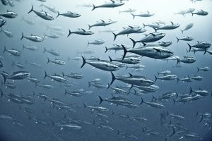 Japan Equities Outlook: What Can Tuna Auctions Tell Us About Future Market Trends?