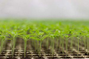 ESG entmystifizieren für ein klares Anlageszenario