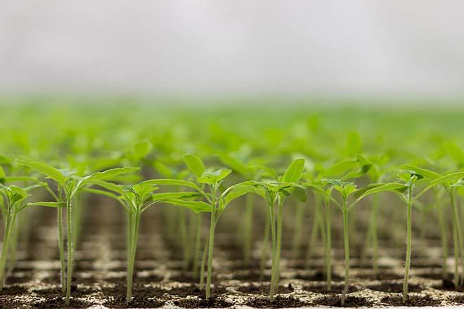 Démystifier l'ESG : construire une thèse d'investissement cohérente