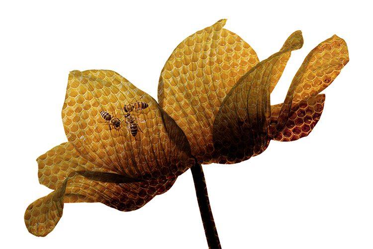 Flower_Bees660x440