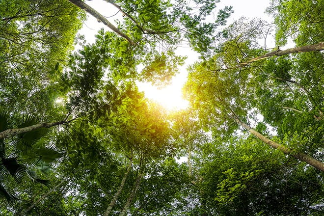 Sustainability Matters: Investing With Positive Impact