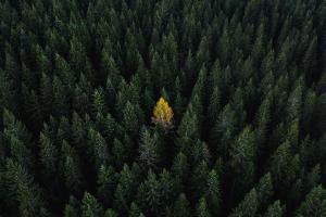 環球可持續投資:快訊、機遇及展望(2020年第2季度最新資訊)(英文版)