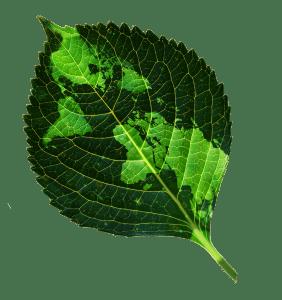 Leaf_worldmap_GNR_800px