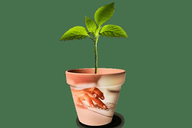 Plant_Calculator_WomenWealth_660x440