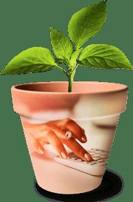 Plant_Calculator_WomenWealth_reducedheight