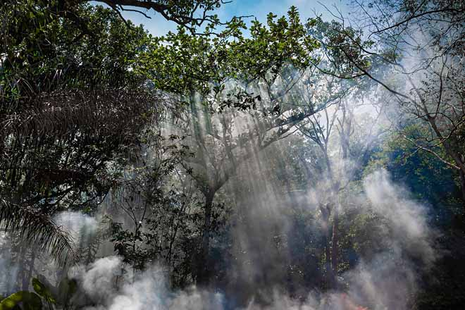 The smoke from the fire in the jungle. The sun's rays make their way through the trees. Hot tropical climate caused a fire.