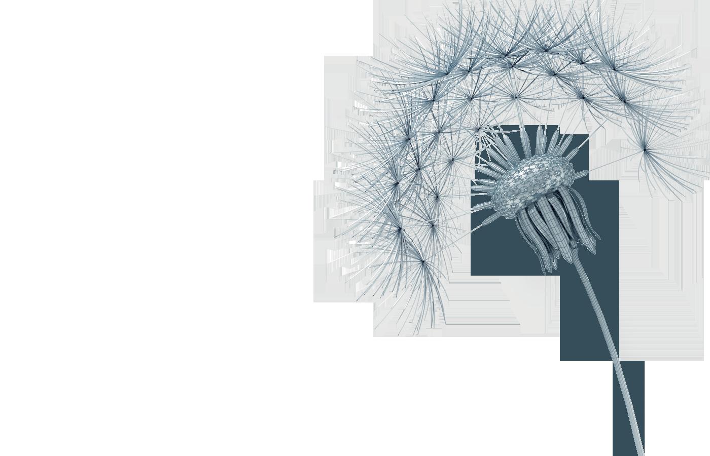 background_dandelion_Wireframe-transparent-test2