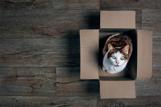Het einde van Schrödingers brexit?