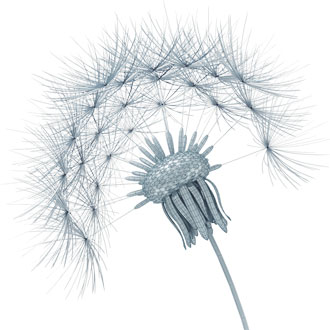menu-dandelion